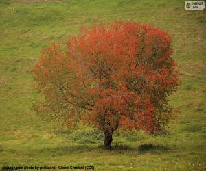 Puzzle de Árbol en otoño