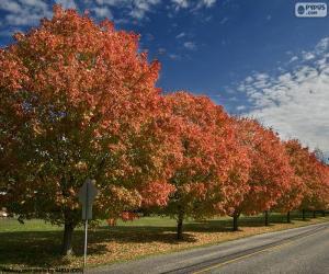 Puzzle de Árboles en otoño