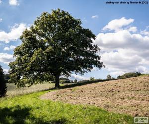 Puzzle de Árbol en el campo arado