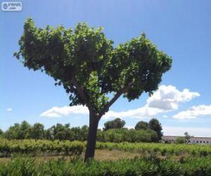 Puzzle de Árbol en el campo