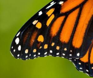 Puzzle de Ala de una Mariposa