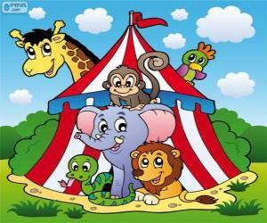 Puzzle de Animales del circo