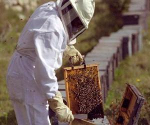 Puzzle de Apicultor trabajando con el traje especial en la colmena para recoger la miel