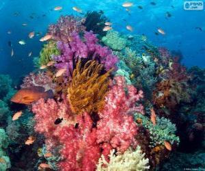 Puzzle de Arrecife de coral