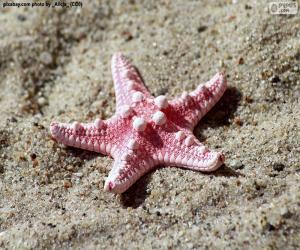 Puzzle de Bonita estrella de mar