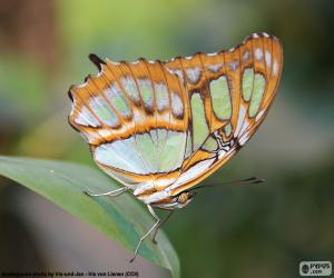 Puzzle de Bonita Mariposa