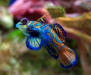 Puzzle de Bonito pez tropical