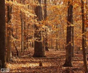 Puzzle de Bosque en otoño