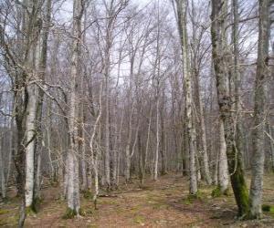 Puzzle de Bosque sin hojas en invierno