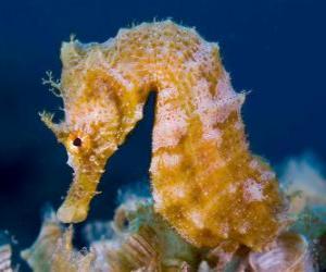 Puzzle de Caballito de mar o hipocampo