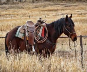 Puzzle de Caballo de un cowboy