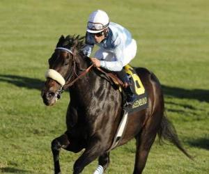 Puzzle de Caballo y jockey en una carrera de caballos en el hipódromo