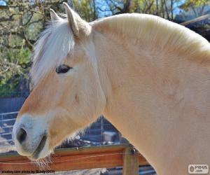 Puzzle de Cabeza de caballo beig