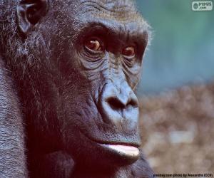 Puzzle de Cabeza de gorila