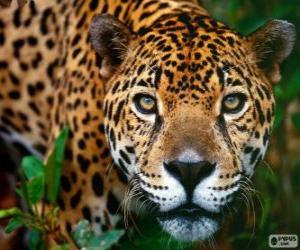 Puzzle de Cabeza de Jaguar