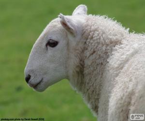 Puzzle de Cabeza de oveja