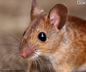 Puzzle de Cabeza de ratón