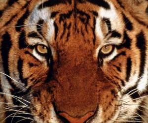 Puzzle de Cabeza de tigre
