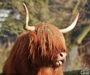 Puzzle de Cabeza de vaca de Highland