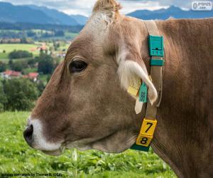 Puzzle de Cabeza de vaca