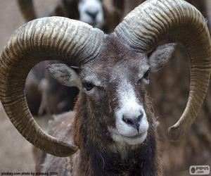 Puzzle de Cabra con grandes cuernos