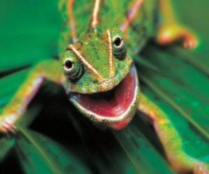 Juegos de Puzzles de Reptiles 2