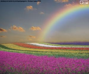 Puzzle de Campo de flores