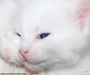 Puzzle de Cara gato blanco