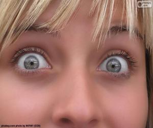 Puzzle de Cara ojos claros