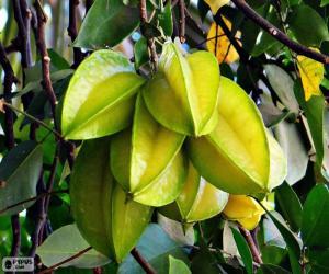 Puzzle de Carambola, fruta exótica