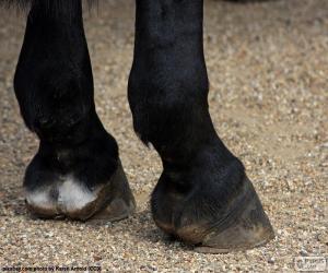 Puzzle de Cascos del caballo
