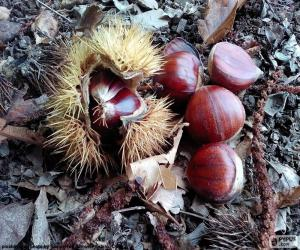 Puzzle de Castañas, uno de los frutos típicos del otoño