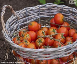 Puzzle de Cesta de tomates