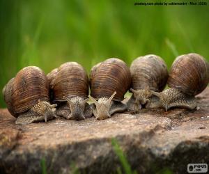 Puzzle de Cinco caracoles