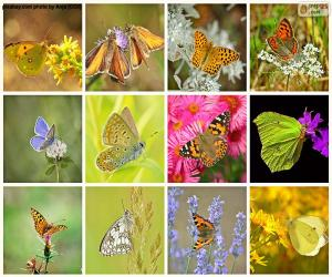 Puzzle de Collage de mariposas