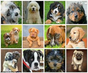 Puzzle de Collage de perros