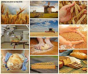 Puzzle de Collage del pan