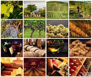 Puzzle de Collage del vino
