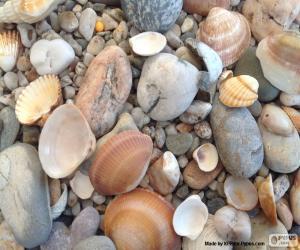 Puzzle de Conchas y piedras marinas