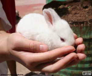 Puzzle de Conejito blanco, manos