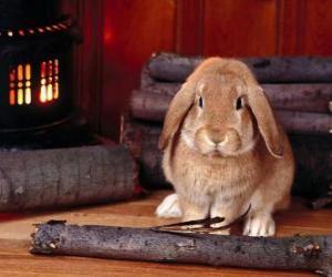 Puzzle de Conejo al lado del fuego