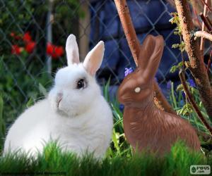Puzzle de Conejo blanco y de chocolate