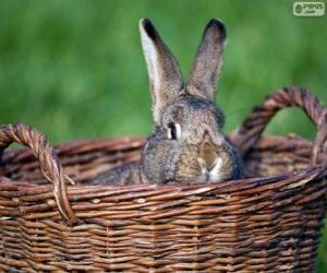 Puzzle de Conejo dentro de una cesta de mimbre