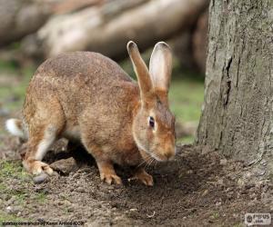 Puzzle de Conejo en busca de comida
