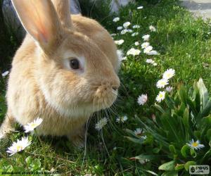 Puzzle de Conejo en primavera