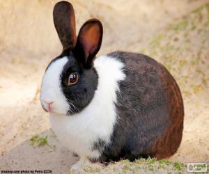 Puzzle de Conejo marrón y blanco