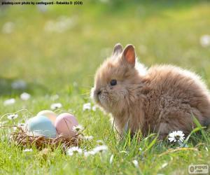 Puzzle de Conejo y huevos de Pascua