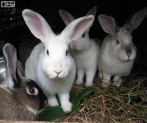 Puzzle de Conejos en su madriguera