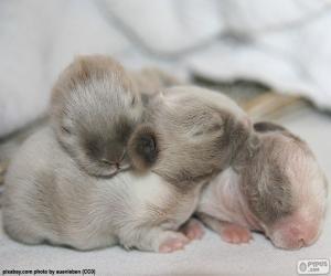 Puzzle de Conejos recién nacidos