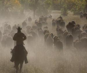 Puzzle de Cowboy o vaquero guiando a un rebaño